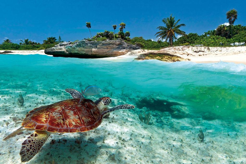 Antigua-And-Barbuda turtle pic